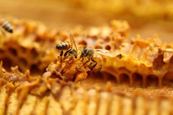 tratament-cu-albine