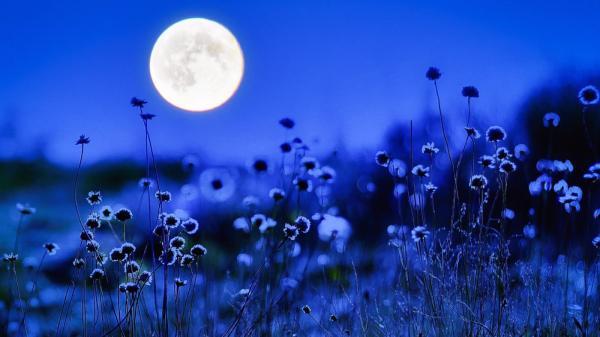 gradinaritul-si-ciclul-lunar