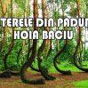 Misterele pădurii Hoia Baciu – Documentar Tradus