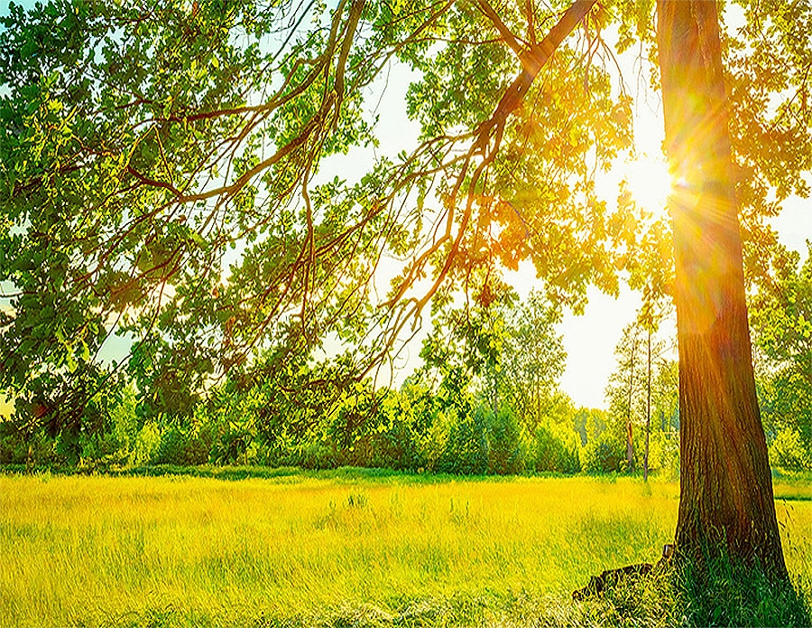 copacul-care-se-ruga