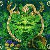 Legătura dintre Om, Plante și Aștrii Cerești