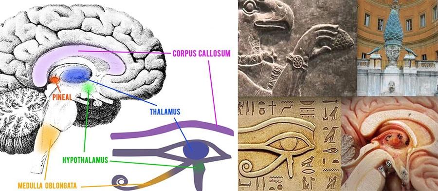 intelepciunea-pierduta-glanda-pineala-ochiul-lui-horus-ra
