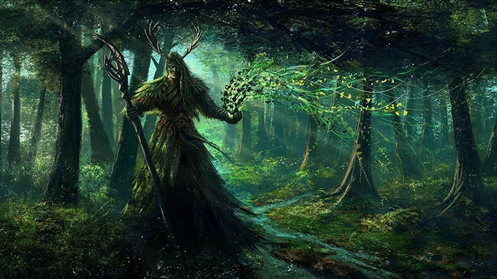 druizii-oamenii-stejarului-in-natura