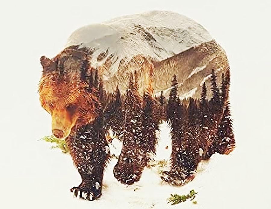 ce-semnifica-sau-simbolizeaza-ursul