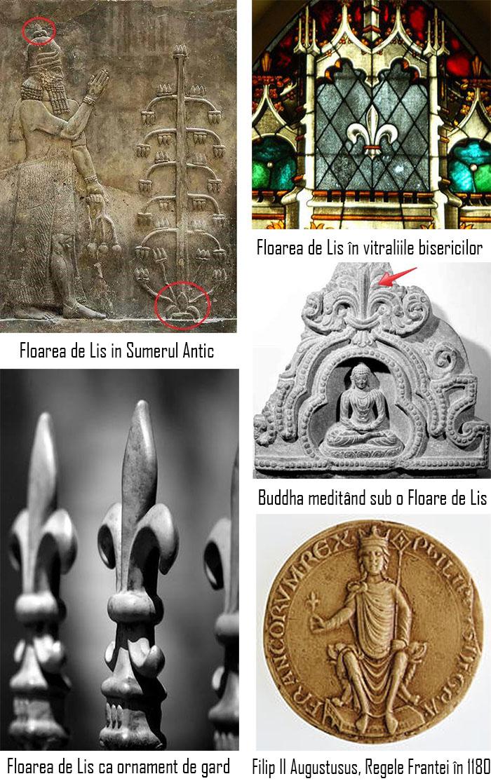 fleur-de-lis-lys-floarea-de-lis-lys-origine-simbolistica-beneficii-01
