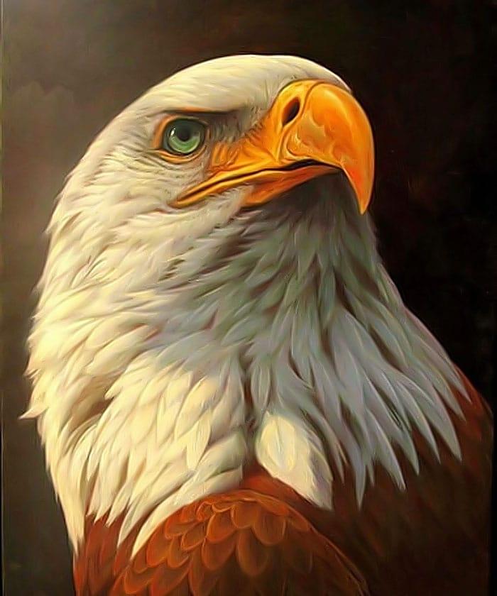 ce-semnifica-reprezinta-simbolizeaza-vulturul-01